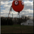 Bird Bopper Balloon Scare Device