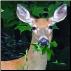 Deer-Gard Protects Plants and Flowers