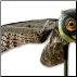 Prowler Owl Flapping Decoy