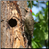 Woodpecker Pro Bird Repeller