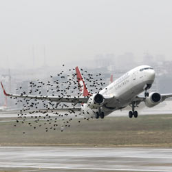 Birds cause damage at airport