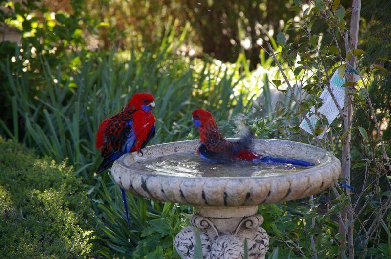 Birdbath Problems