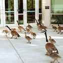 Corporate Grounds Bird Control
