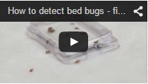 Video Bed Bug Monitor