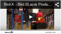 Video Bird Blazer