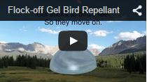 Video Flock Off! Bird Gel