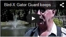Video Gator Guard