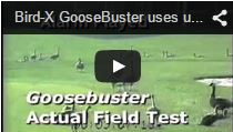 Video Goose Buster